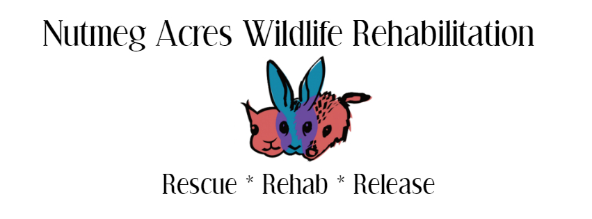 Nutmeg Acres Wildlife Rehabilitation