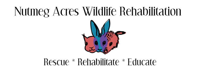 Nutmeg Acres Wildlife Rehabilitation